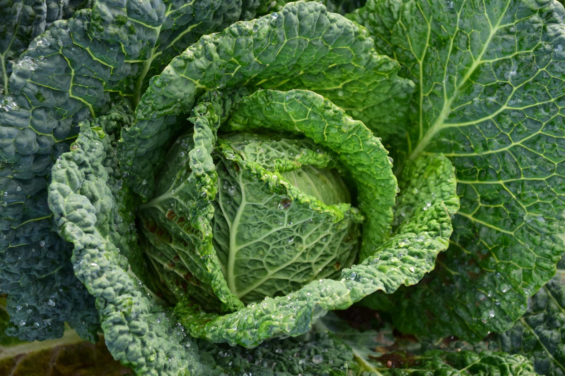 fresh veggies are the best part of gardening