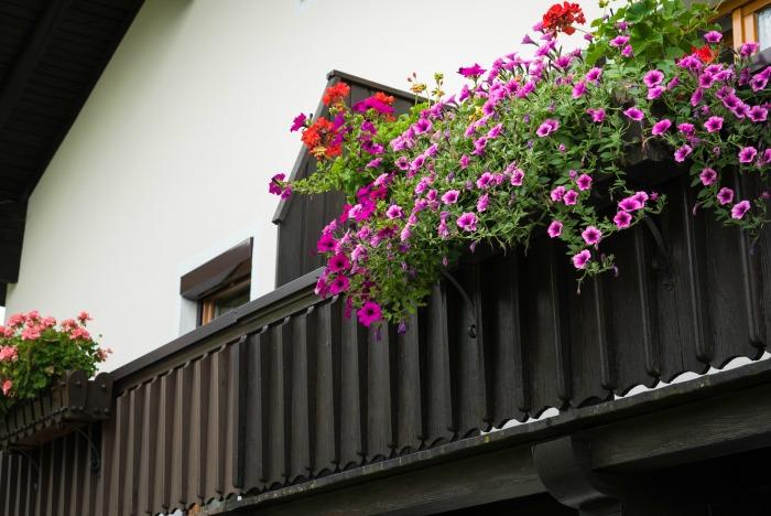 Windowsill flower boxes