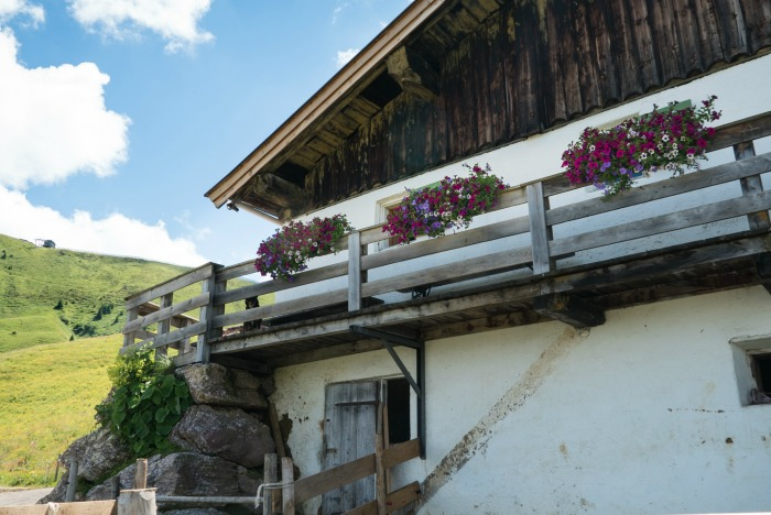 Balcony flowers on a milk barn in Austria