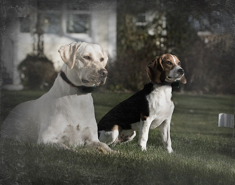 Guide To The Best Wireless Dog Fence and In-Ground Fence ...