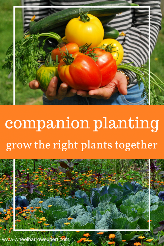 What is companion planting and how does it work in your garden. From the history of companion planting to best plant partners, we cover it all in this guide.