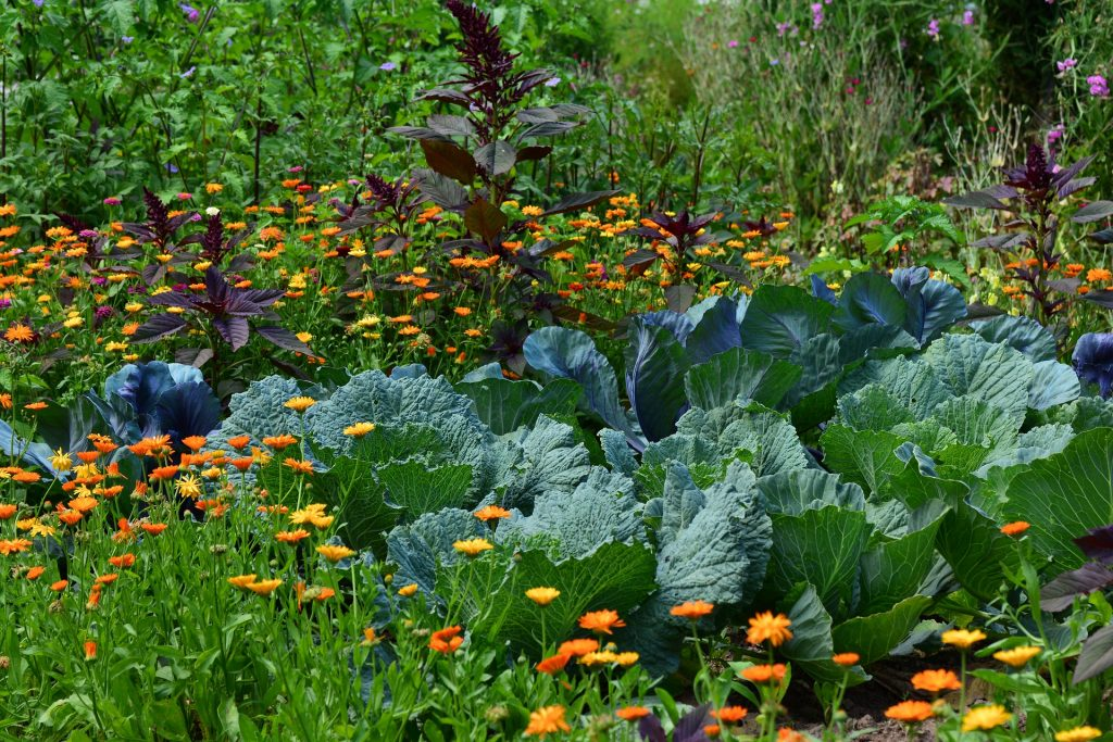 companion flowers for vegetable garden