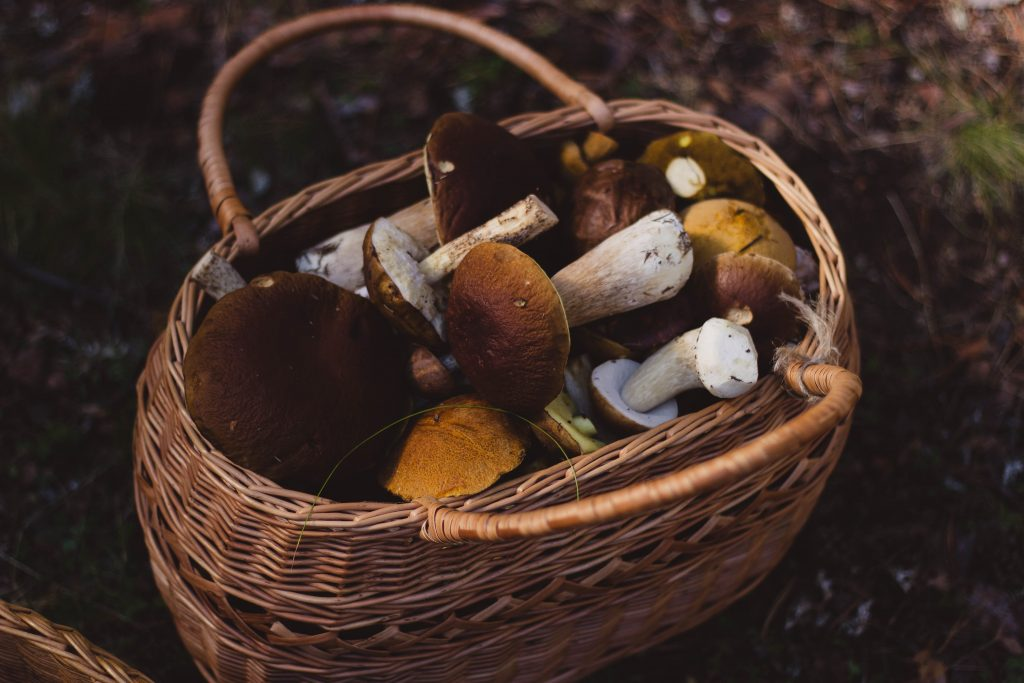 Grow your own mushrooms at home and then put them in a cute basket.