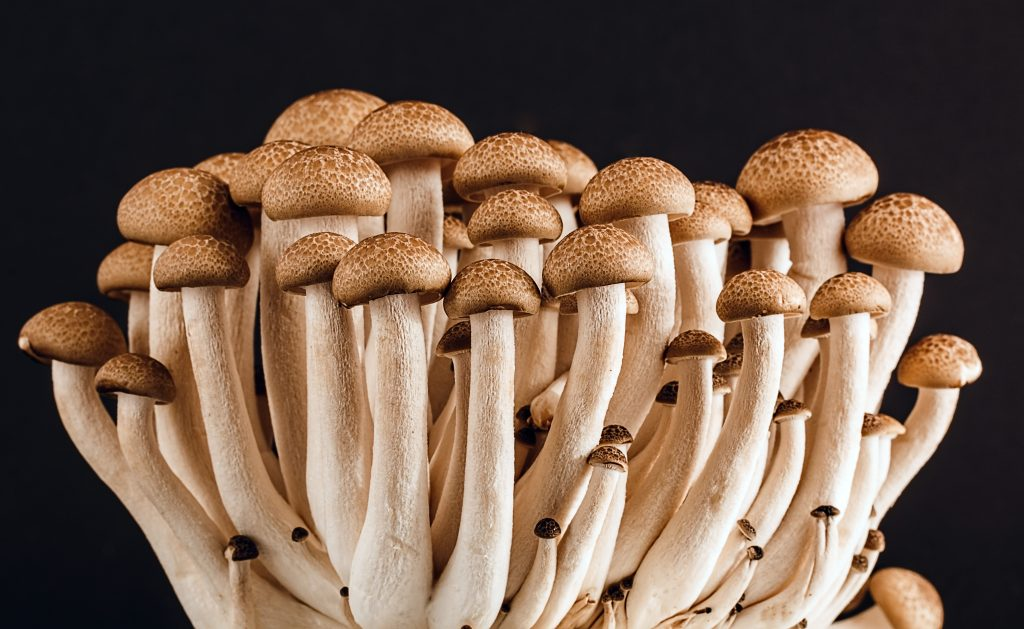 all the supplies to grow your own mushrooms at home