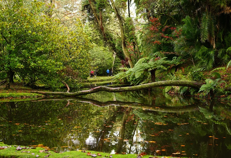 Terra Nostra Botanical Park, Sao Miguel, Azores, Portugal – Deeptha from The Globe Trotter