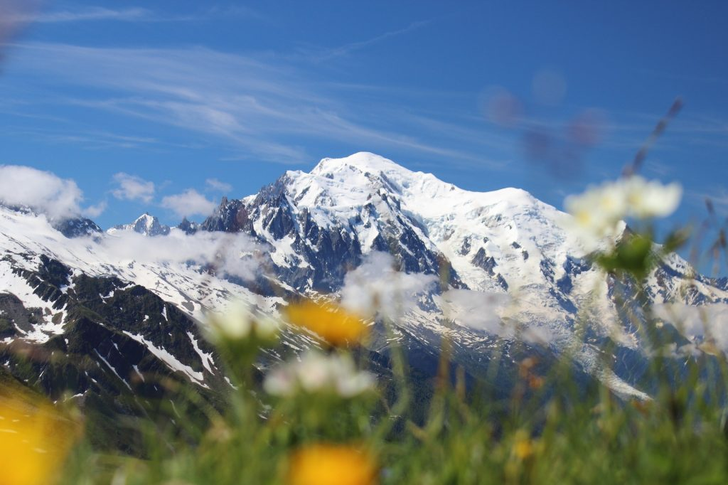 Saussurea Alpine Botanical Garden, Courmayeur, Italy – Gemma from A Girl And Her Dog On The Road