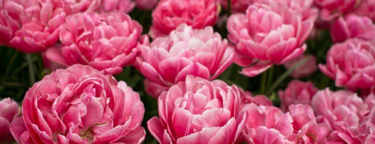 Keukenhof Gardens, Lisse, Netherlands – Bianca from NomadBiba