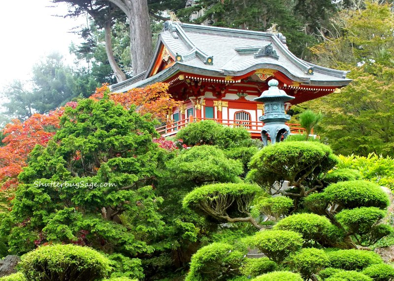 Japanese Tea Garden, San Francisco, California – Sage from Everyday Wanderer