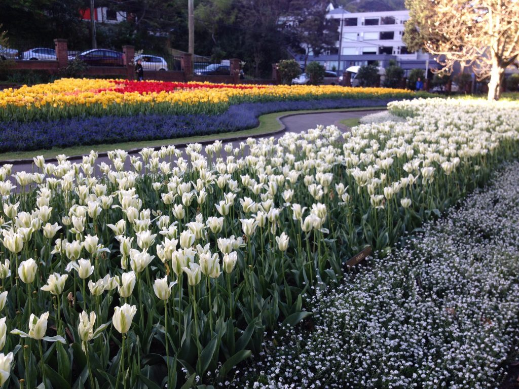 Wellington Botanic Gardens, Wellington, New Zealand – Sarah from Sarah Sees The World
