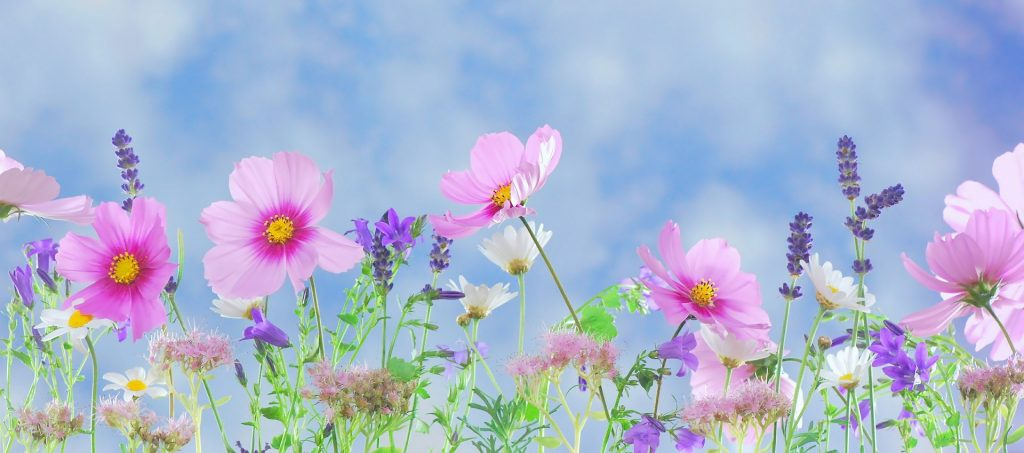 best gifts for flower gardeners