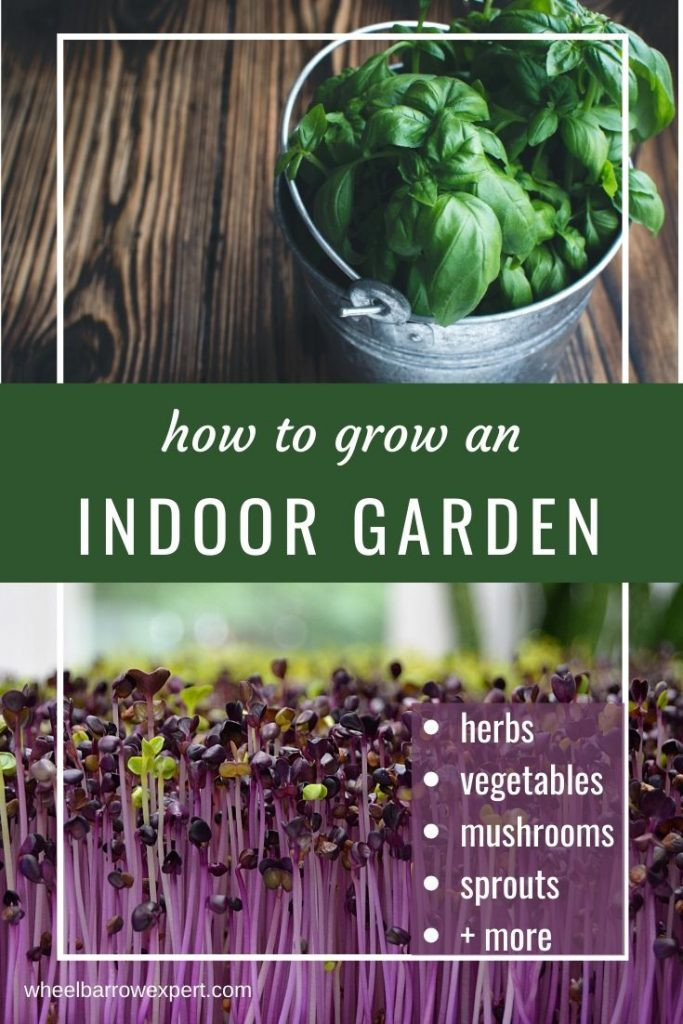 Want to grow your own food inside? With my best indoor garden ideas you can grow herbs, vegetables, mushrooms, and more - all in your house! #garden #kitchengarden #indoorprojects