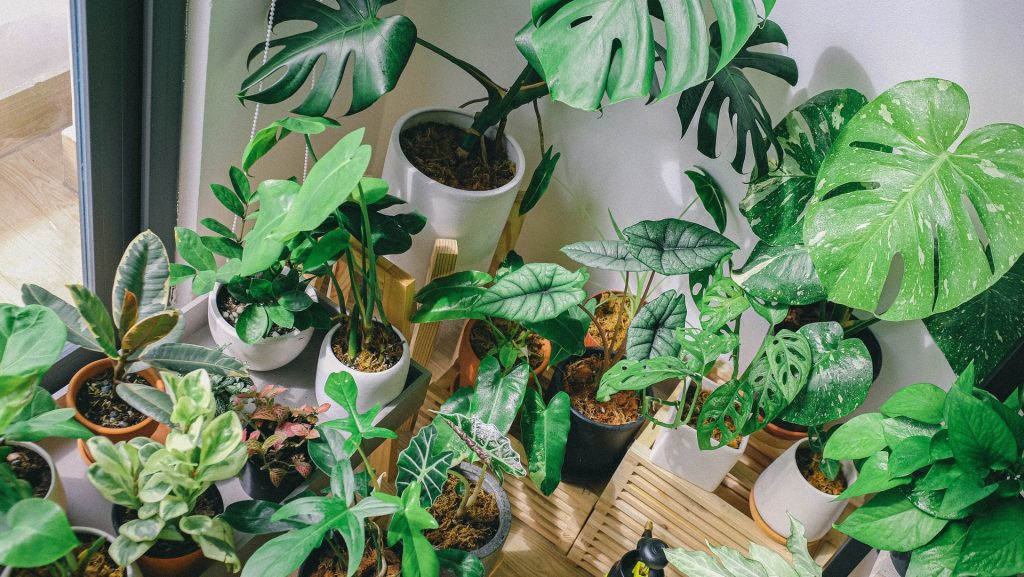 indoor plants clean the air