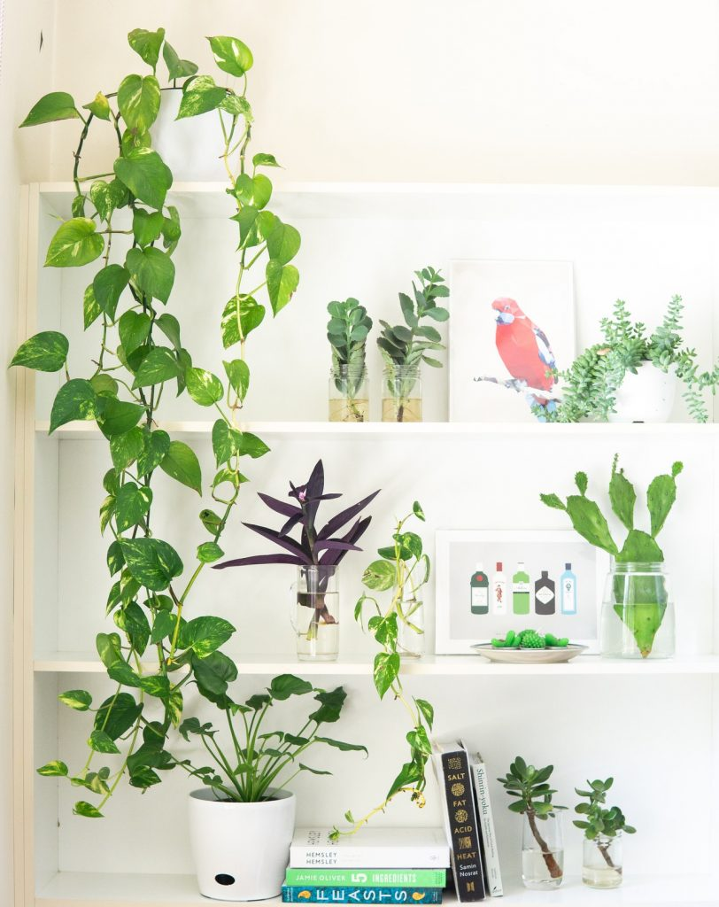 8 Best Indoor Plants That Clean The Air
