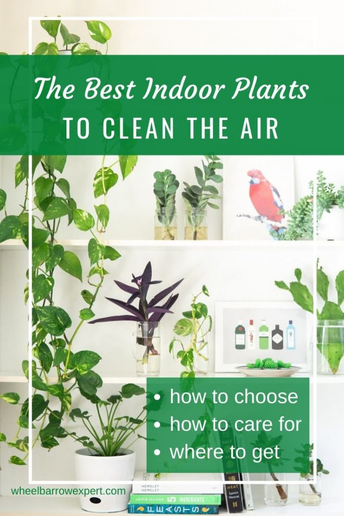 Do you want a healthy indoor environment? Want the best indoor plants that clean the air? I share 8 of my fave houseplants that are also easy to maintain. #houseplants #indoorgarden #cleanair