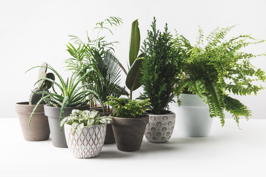 when to fertilize house plants