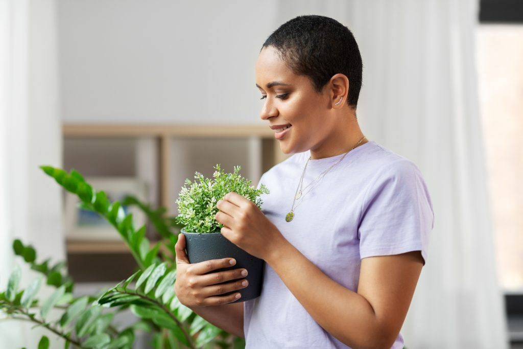 taking care of house plants at home