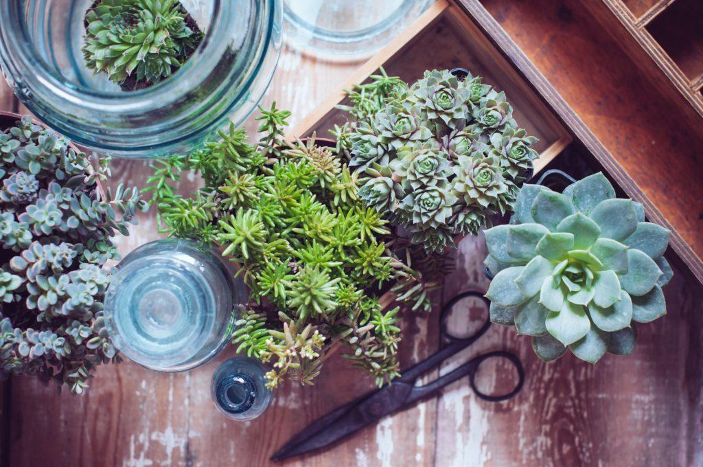 how to fertilize house plants