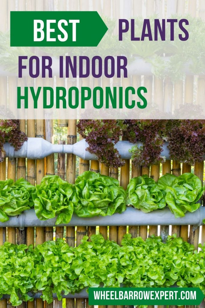 the best plants to grow with hydroponics indoors