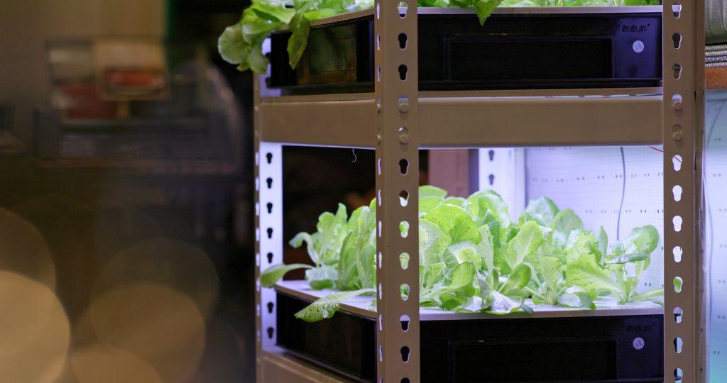 Hydroponics plantation of vegetable at indoor
