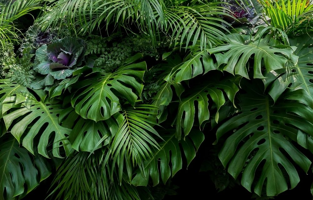 There are many types of monstera plants